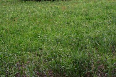 Eastern Wild Turkey prefer habitat that includes forest openings