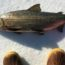 Lake Whitefish on Ice with Sorel boots