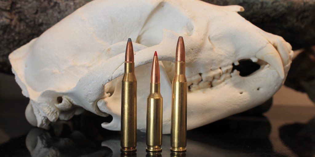 6.5 Creedmoor versus .270 cartridge - Modern Carnivore