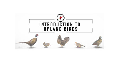 Learn-to-hunt-upland-birds-hunting-camp-live-by-modern-carnivore