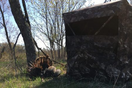 Using a bling for turkey hunting